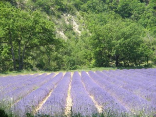 Tour France Lavender