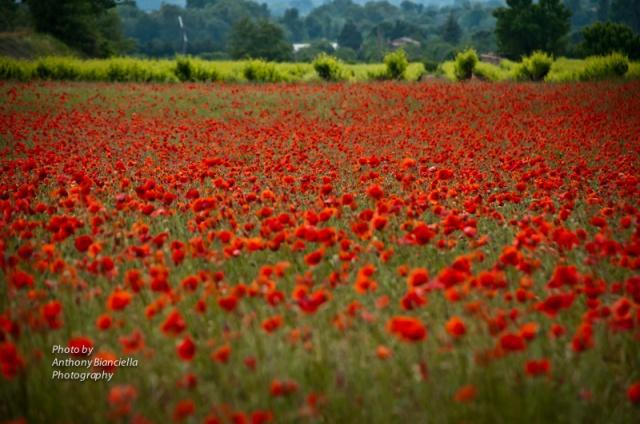 1984-ABianciella-Provence5-2011