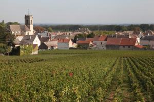 Typical of Burgundy, wines and quaint towns and villages