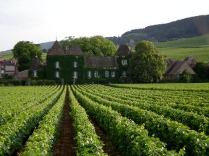 One of the most famous wine-growing regions in the world- for good reason!