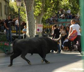 One of the first bulls to run free in the square on Bastille Day.