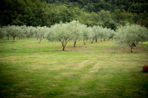 Olive orchards are around every corner